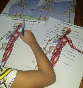 aprendiendo el cuerpo humano